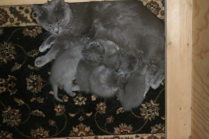 Edith Piaf with Her Kittens