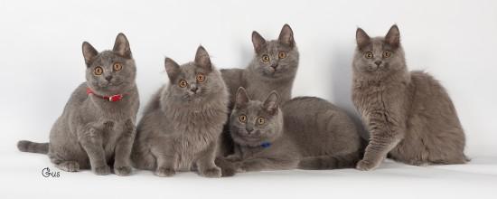 Carchet Kittens